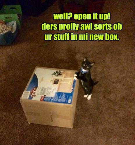 captions Cats funny - 8423538176