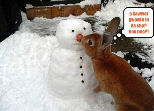 blizzard snow carrot noms bunny snowman - 8423637504