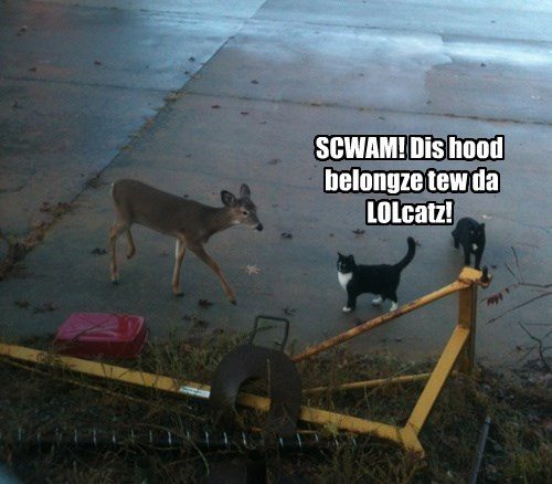 neighborhood,deer,Cats