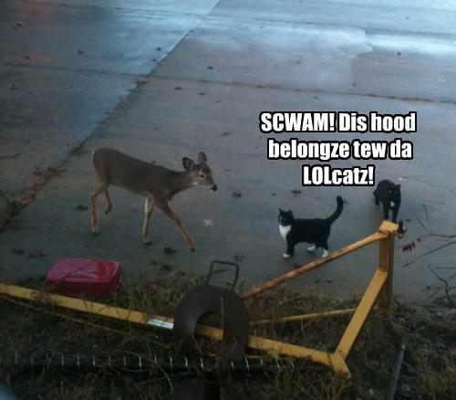 neighborhood deer Cats - 8423898368