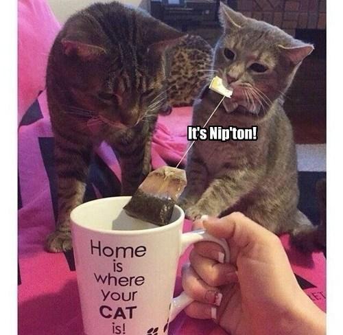 puns tea nip Cats - 8423931904