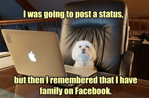 dogs status update facebook social media