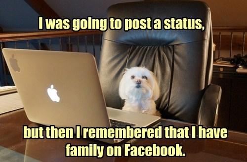 dogs status update facebook social media - 8424020480