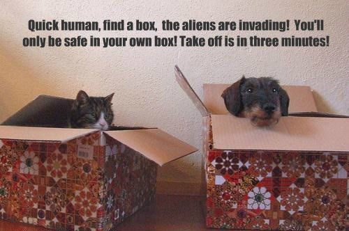 Quick human, find a box, the aliens are invading! You'll only be safe in your own box! Take off is in three minutes!
