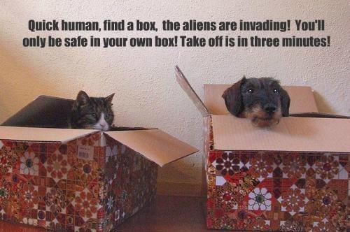 Aliens box if i fits i sits Cats - 8424021760
