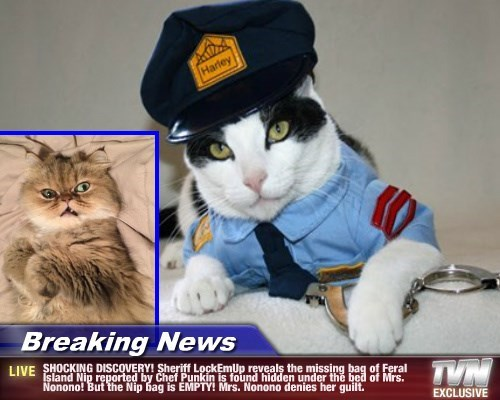 Breaking News - SHOCKING DISCOVERY! Sheriff LockEmUp reveals the missing bag of Feral Island Nip reported by Chef Punkin is found hidden under the bed of Mrs. Nonono! But the Nip bag is EMPTY! Mrs. Nonono denies her guilt.