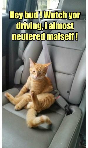 tabby Awkward neuter Cats - 8424925440