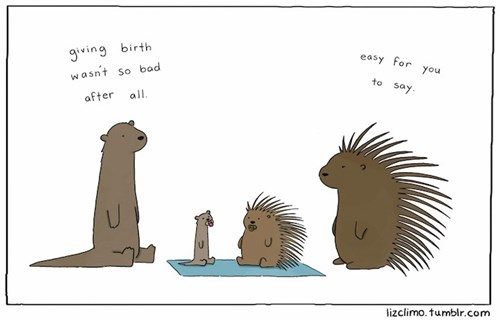 porcupine critters otters birth web comics