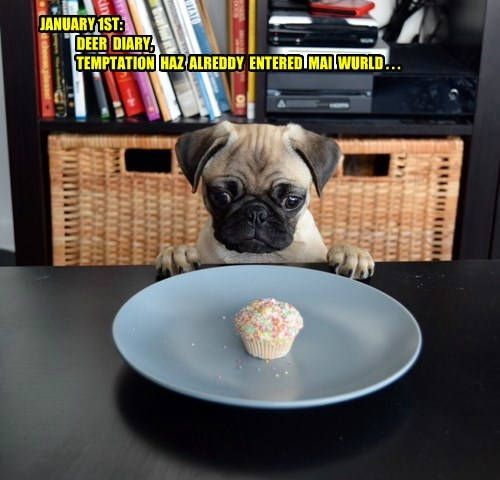 temptation,cupcake,pugs,resolution