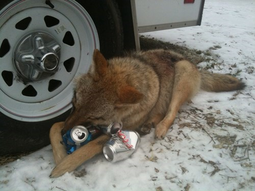 beer,funny,dogs,wtf,wolf