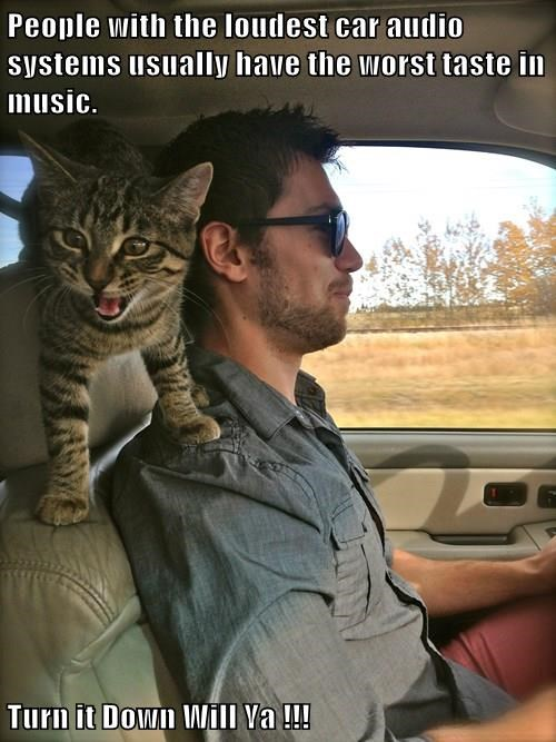animals taste cat Music car audio caption worst loudest - 8425205760