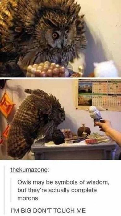 tumblr Owl - 8425264384