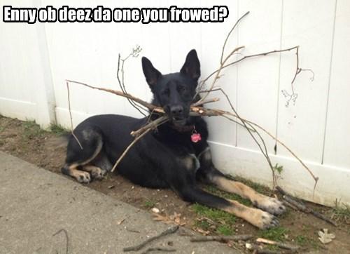 fetch german shepherd - 8425300736