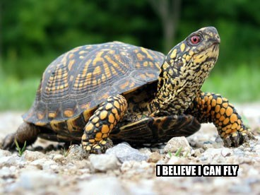fly,turtle,believe