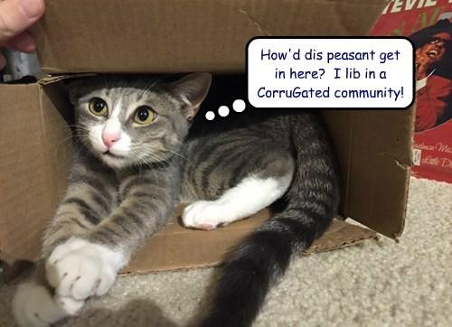 captions Cats funny - 8425413888