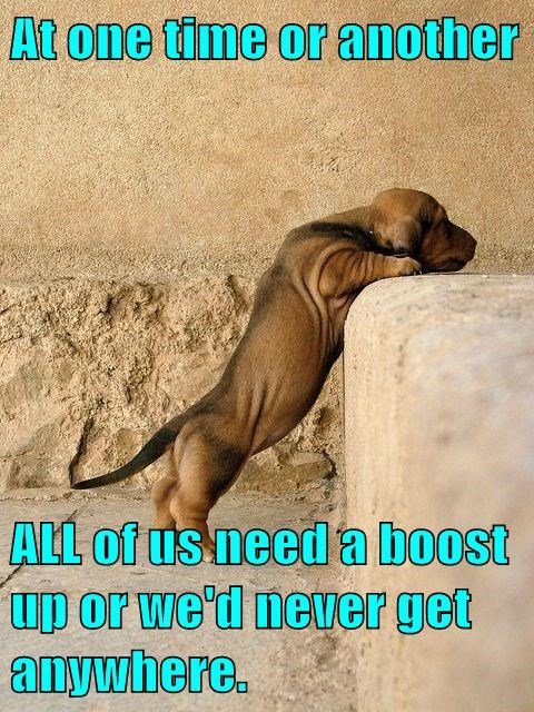 animals dogs inspiration climbing funny captions - 8425508608