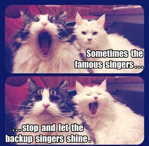 captions cute Cats - 8425731328