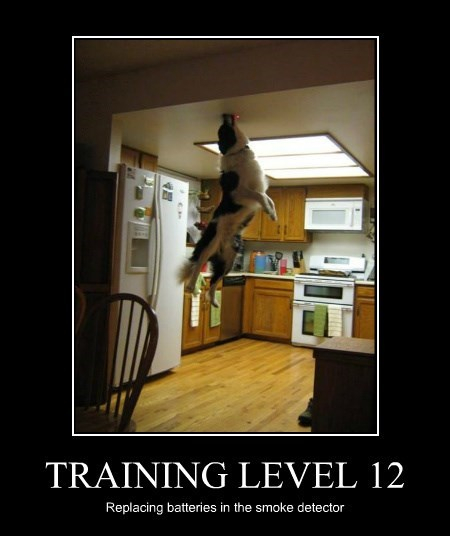 dogs,smoke detector,training,genius
