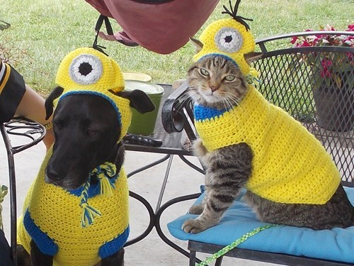 dress up your pet day - 8425750272