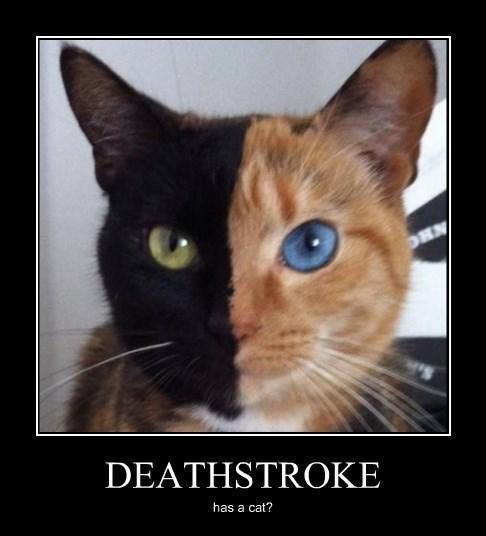 deathstroke cat superheroes funny - 8425752320