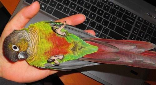 birds cute - 8425775104