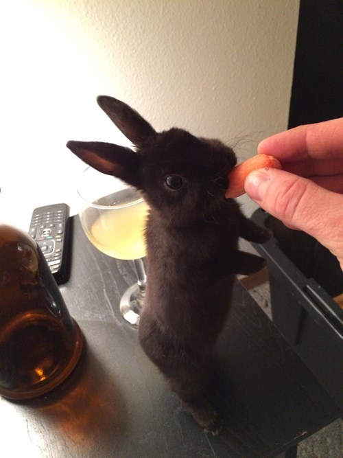 Bunday carrot cute wine bunny - 8425799680