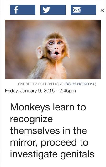monkeys love their genitals