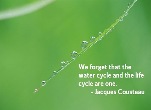 water cycle life cycle science quote