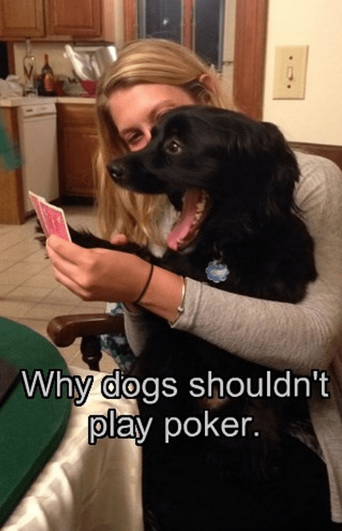 dogs FAIL bluffing poker