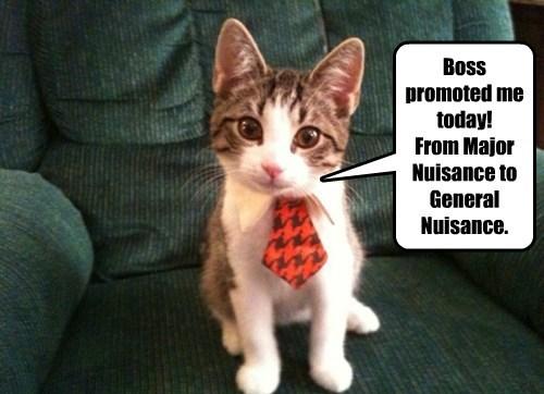 Business Cat job money promotion - 8425936128