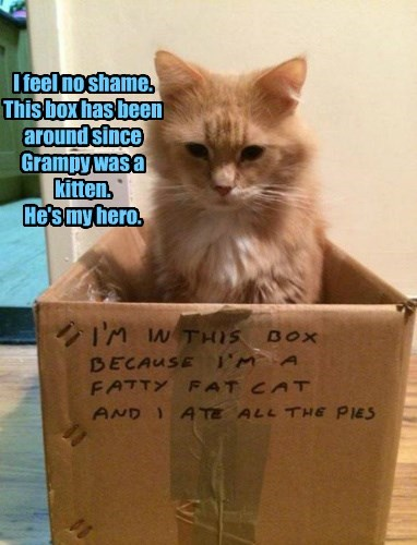 box captions shame Grandpa Cats - 8425956608