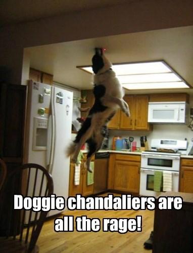 Cheezburger Image 8425997568