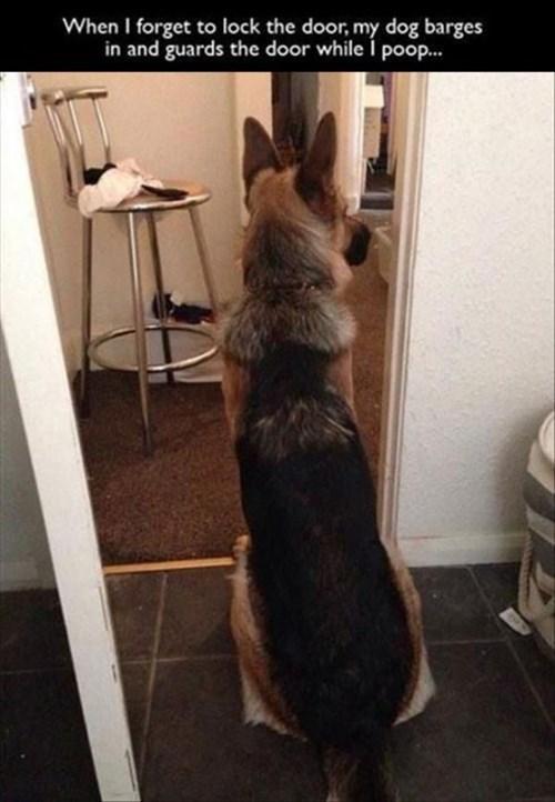 poop german shepherd i have no idea what im doing - 8426316032