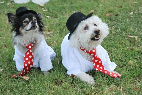 dress up your pet day - 8426337280