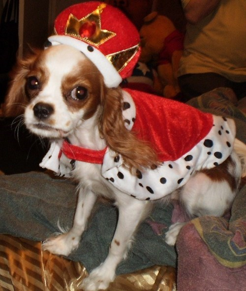 dress up your pet day - 8426376448