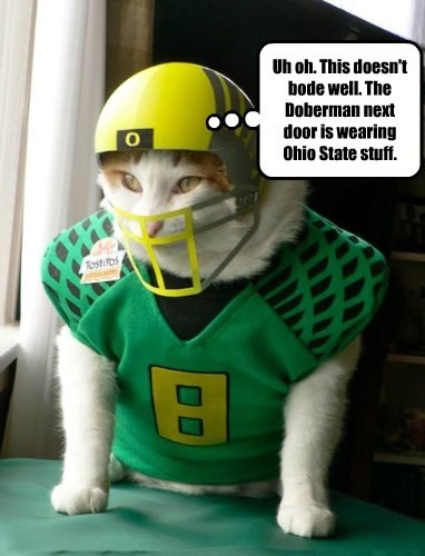 door,cat,next,dogs,caption,ohio state
