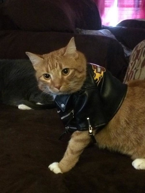 dress up your pet day - 8426668032