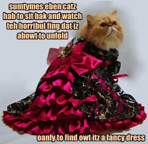 sumtymes eben catz hab to sit bak and watch teh horribul fing dat iz abowt to unfold oanly to find owt itz a fancy dress