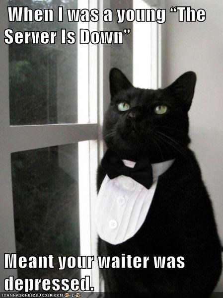 animals cat depressed waiter server down