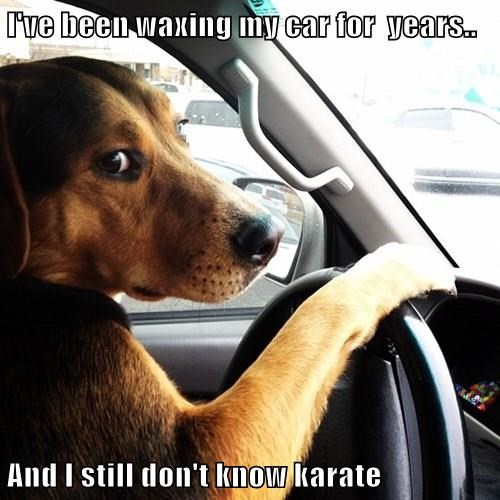 animals dogs car dad jokes - 8426874368