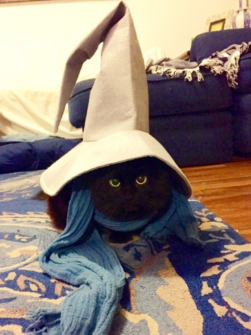 final fantasy,dress up,Cats,animals,black mage