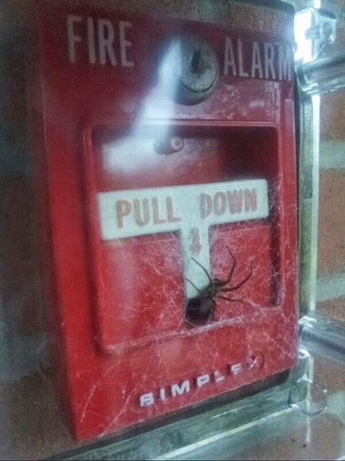 spider Kill It With Fire fire alarm oh god why fail nation g rated - 8426962432