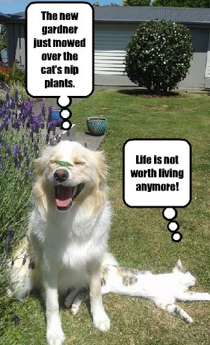 dogs captions Cats funny - 8427063296