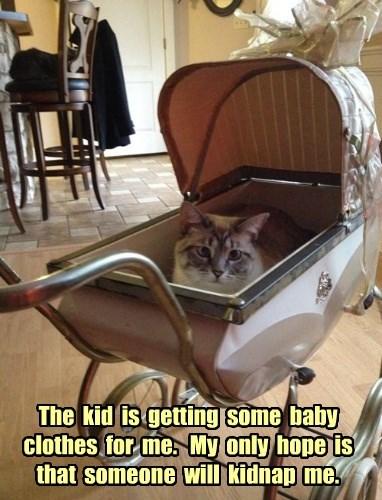 captions Cats funny - 8427135488