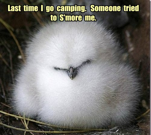 baby animals,whoops,birds,smores