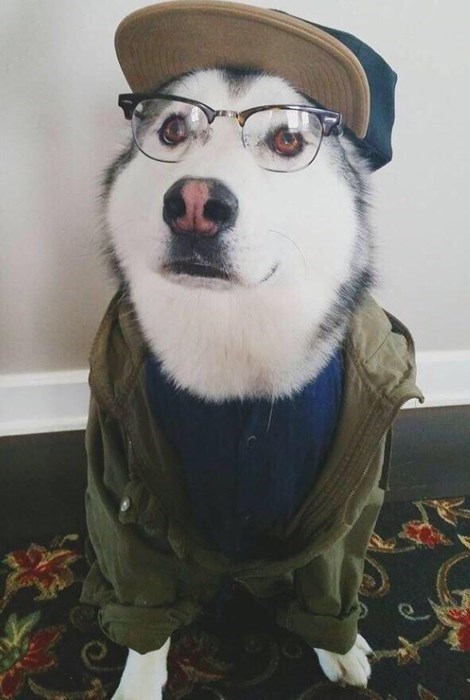 dogs,poorly dressed,glasses,hipster