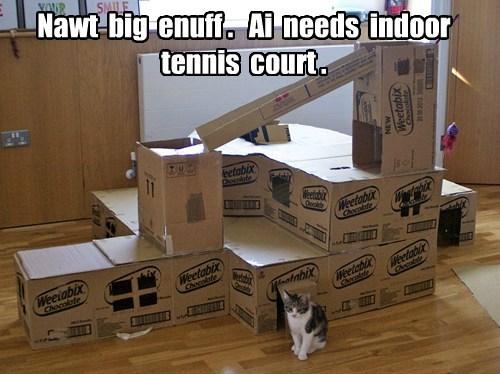 Cats box if i fits i sits spoiled - 8427354880