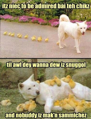 chicks snuggle ladies man - 8427394560