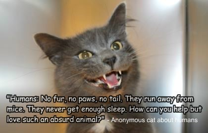 absurd humans Cats quote - 8427415296