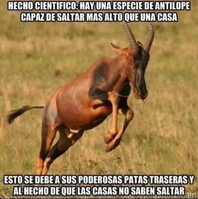 bromas Memes animales - 8427443456